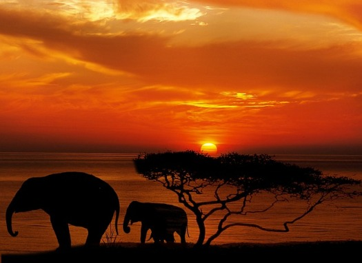 elephant-1240011_640