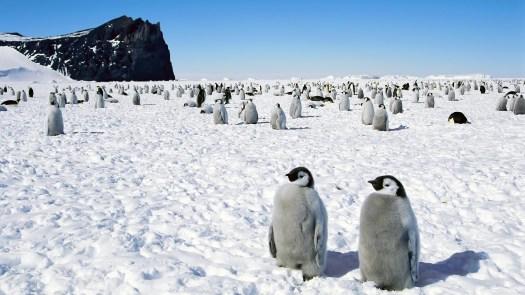1062951_penguins-happy-feet-emperor-antarctica-wallpapers_2560x1600_h.jpg